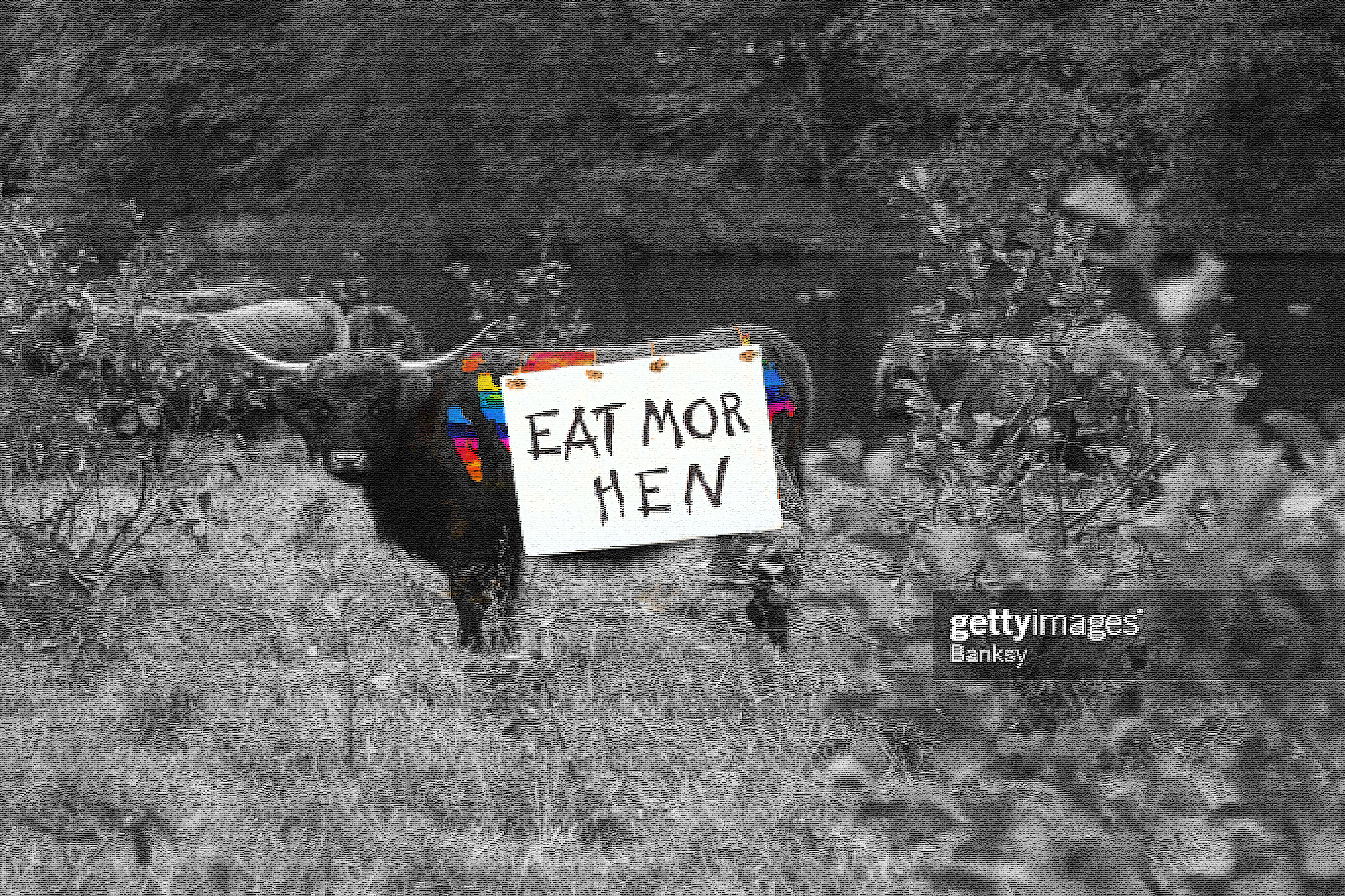 a propoganda piece taking aim at chic-fil-a of a bull with rainbow spots more like than of a cow with a sign that says eat more hen in support of LGBTQ rights. With a Getty Images photo tag as if the lifelike scene was capture by banksy due to its controversiality